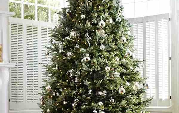 Christmas Tree Purchase & Care Guide
