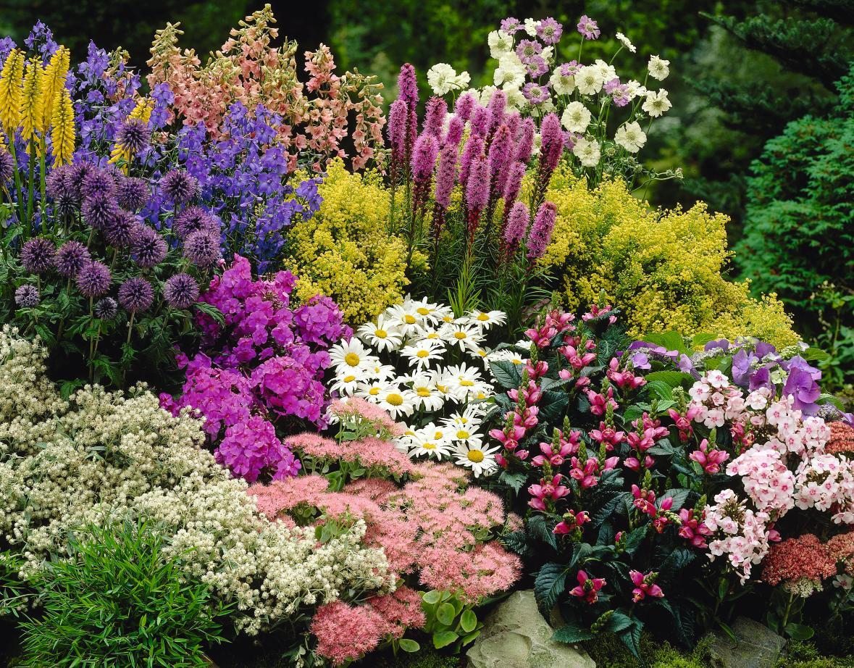 perennials plant
