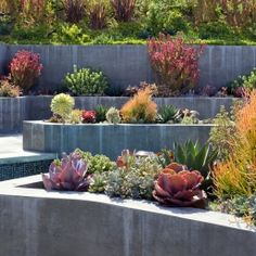 raised beds succulents
