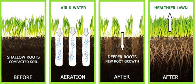 before & after aeration - best way to aerate lawn