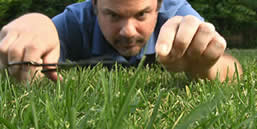 cutting grass with scissor - how to cut grass without a lawnmower
