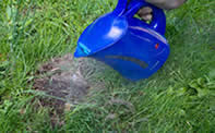 don't use boiling water - how to get rid of ant hills in the lawn