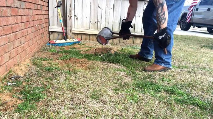 how to get rid of ant hills in the lawn