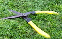 shears - how to cut grass without a lawnmower