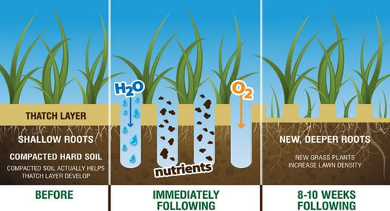 Aeration explained - best time to aerate and overseed