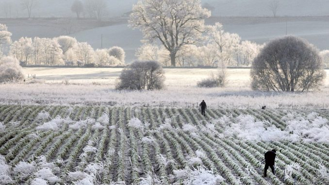Best Way to Protect Plants from Frost