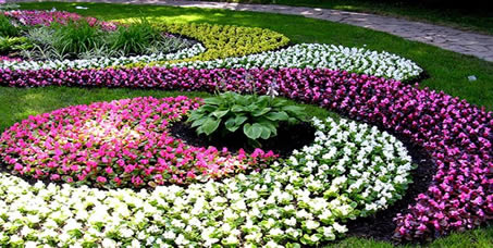 annuals display