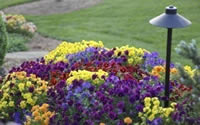 color coordinated annuals in garden