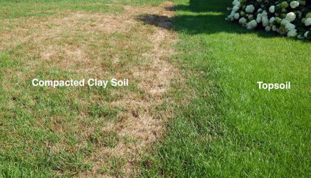 compacted soil effects – best time to aerate and overseed