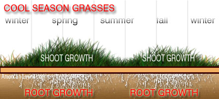 cool season grass - when is the best time to dethatch your lawn
