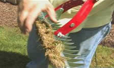 dethatch rake with thatch - when is the best time to dethatch your lawn