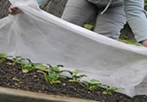 frost-proof with garden fleece