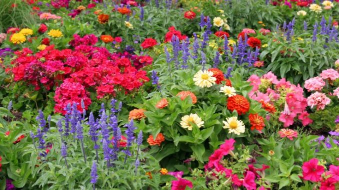 how to plant annuals in the ground