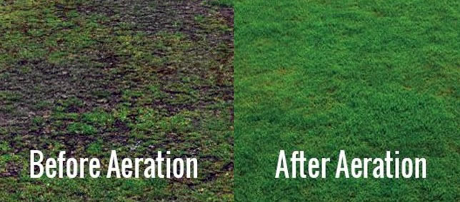 lawn aeration before and after - how to aerate lawn by hand