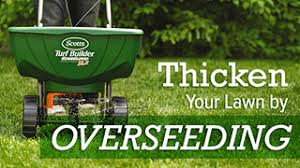 lawn overseeding - best time to aerate and overseed