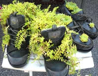 shoes used as plant pots - how to grow vegetables in pots at home