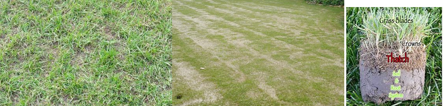 thatch build-up effects - best time to aerate and overseed