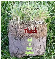 thatch-build-up - when is the best time to dethatch your lawn