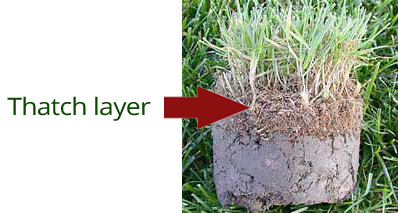 thatch layer - how to aerate lawn by hand