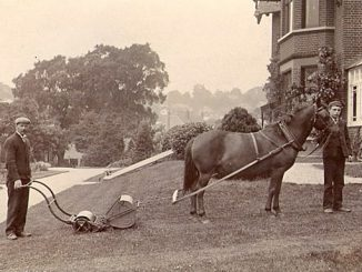 victorian photo of horse pulling lawn mower
