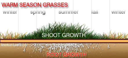 warm season grass - when is the best time to dethatch your lawn