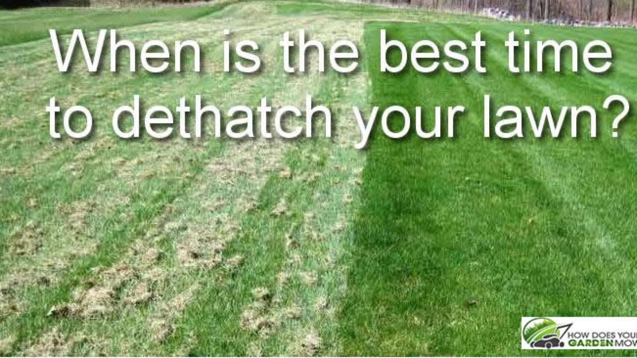 When Is The Best Time To Dethatch Your Lawn How Does Garden Mow