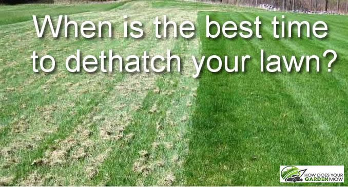 when is the best time to dethatch your lawn