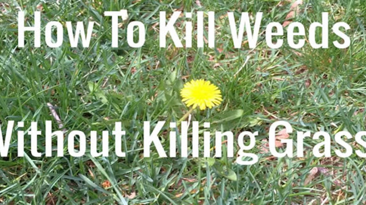 How To Get Rid Of A Lawn Full Weeds Does Your Garden Mow