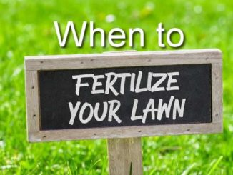 When to Fertilize Your Lawn