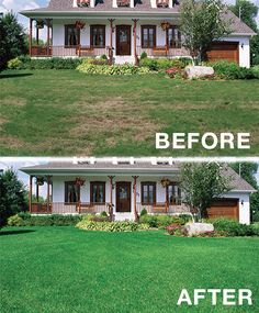 aeration and fertilization - before and after