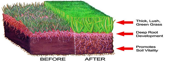 proper fertilization of lawn grass